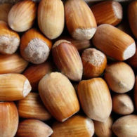 Sadnice voća lešnik - Istarski dugi