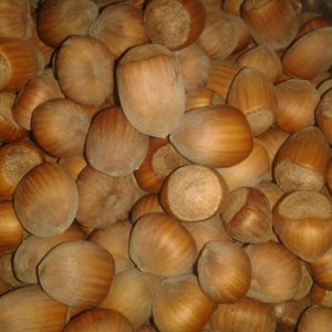 Vocne sadnice lesnik Kalemljeni Istarski okrugli