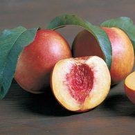 Vocne sadnice nektarina Stark Red Gold