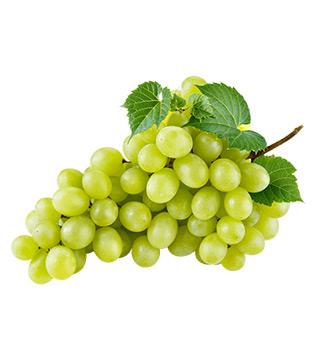 lozni kalem vinske bele sorte