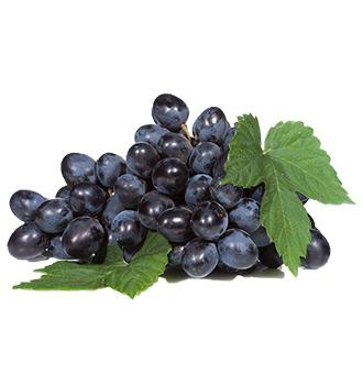 lozni kalem vinske crne sorte