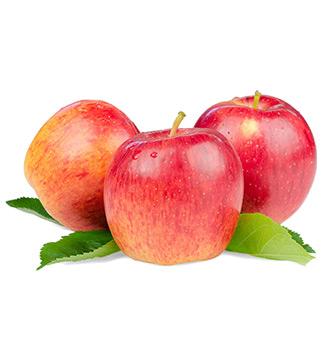 sadnice stubaste jabuke